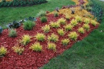 Painted Red Mulch