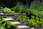 Garden Soil With Plants